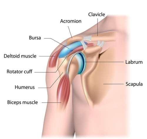 Diagram of human shoulder